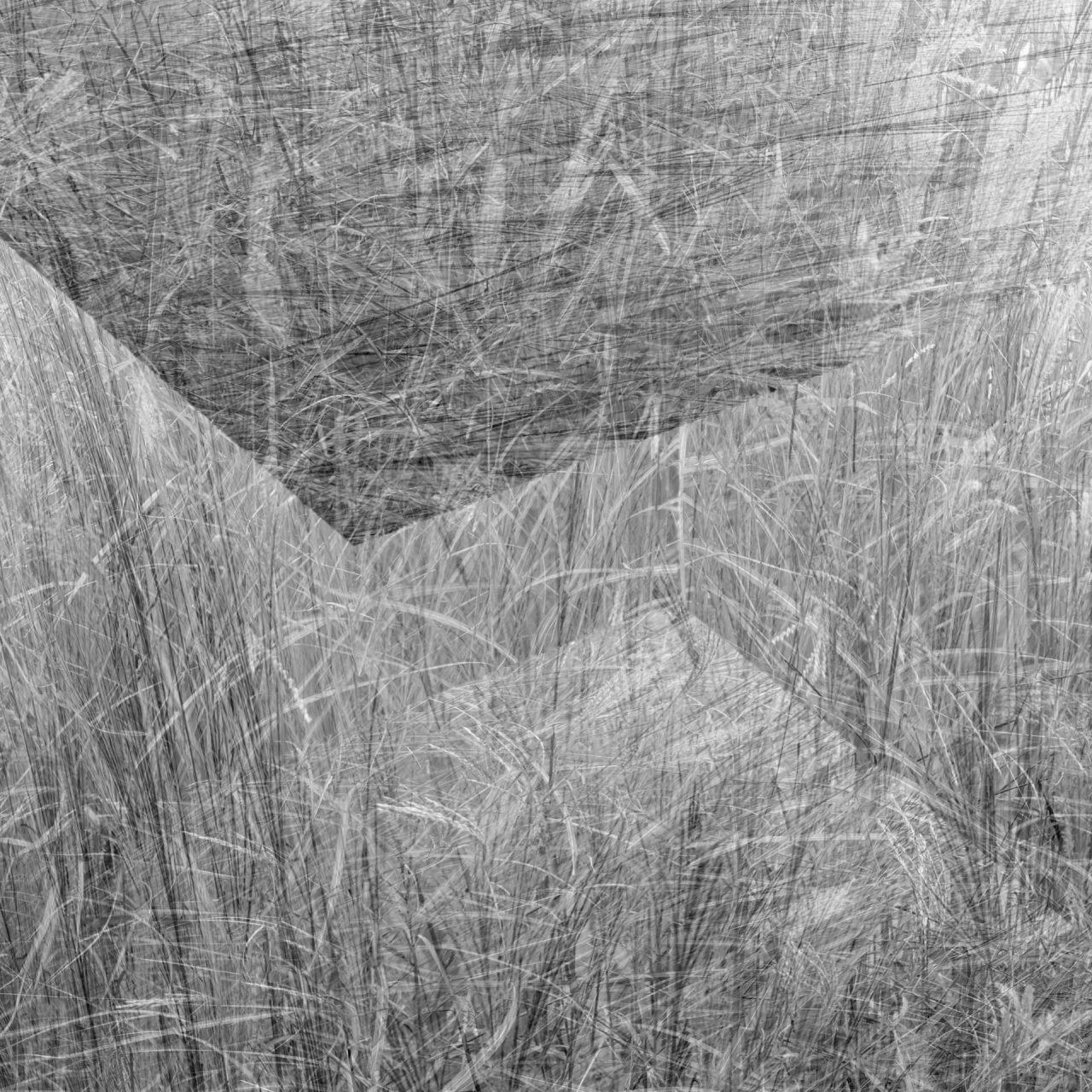 Eyal-Pinkas-Regardening-1-1280x1280