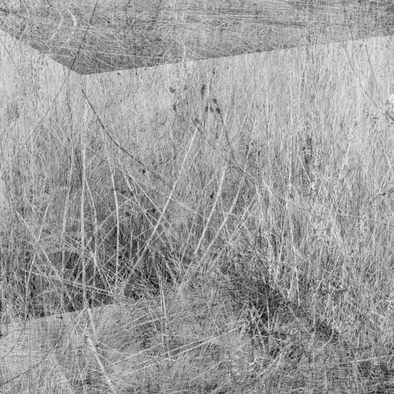 Eyal-Pinkas-Regardening-2-1280x1280