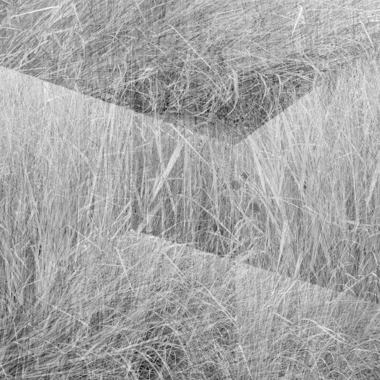 Eyal-Pinkas-Regardening-3-1280x1280